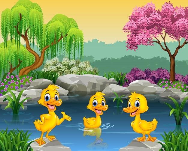 Canards mignons nageant sur l'étang