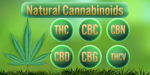 Cannabinoïdes naturels dans le cannabis.