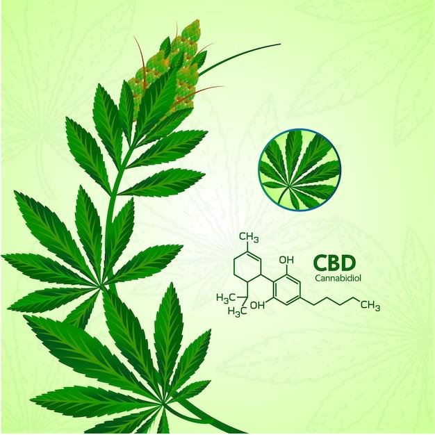 Cannabis avec de nombreux avantages illustration.