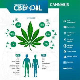 Cannabis pour illustration vectorielle médicale