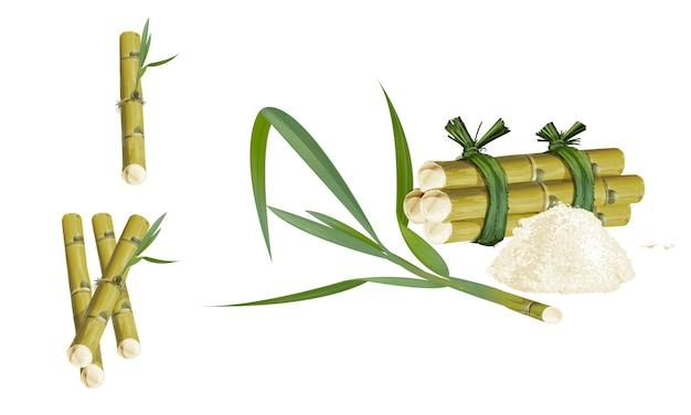 Canne ou canne à sucre douceur et saveur sucrée feuilles sur fond blanc.