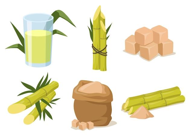 Canne à sucre de dessin animé avec tige et feuilles. illustration