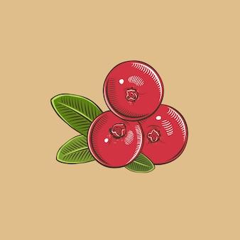 Canneberge dans un style vintage. illustration vectorielle colorée