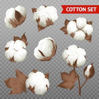 Capsule de coton mûre