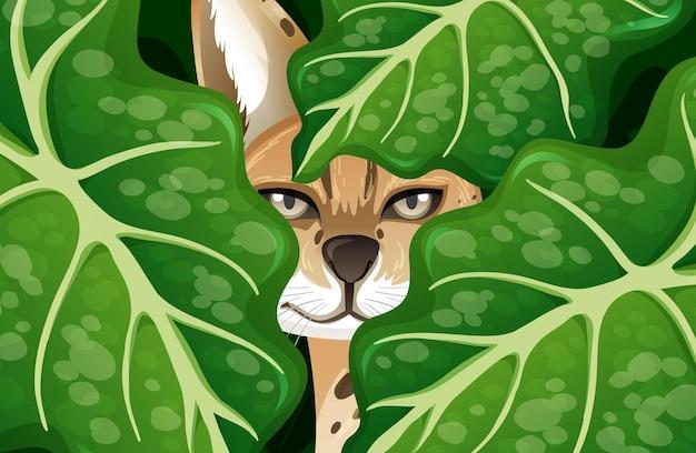 Caracal caché dans la jungle