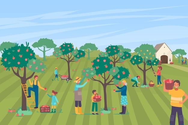 Caractère des agriculteurs ensemble cueillent un grand verger de pommes