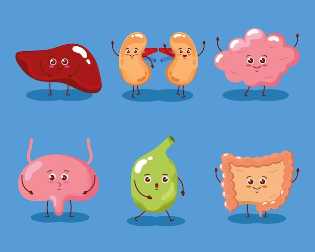 Caractère humain d'organes mignons