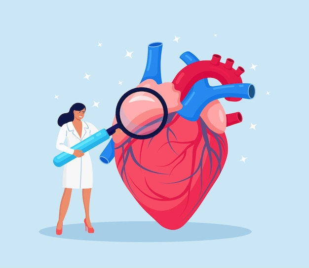 Cardiologie. contrôle de la santé cardiaque et de la pression cardiovasculaire. cardiologue étudiant un organe humain avec une loupe. complications de l'appareil circulatoire, coeur ischémique, maladie coronarienne