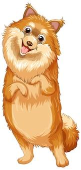 Caricature de chien de poméranie sur fond blanc
