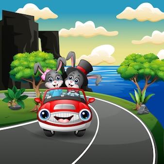 Caricature de lapin en couple au volant d'une voiture sur la route du bord de mer