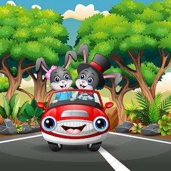 Caricature de lapin en couple conduisant une voiture à travers la forêt