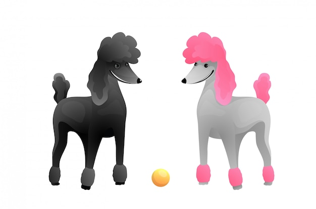 Caricature pour animaux de compagnie de race pure chiots caniche grand. toilettage vétérinaire et chien montrent illustration vectorielle.