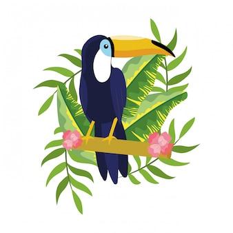 Caricature de tucano tropical