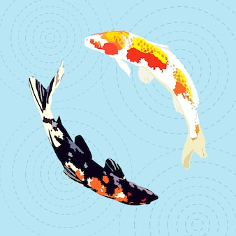 Carpe chinoise, poisson koi japonais