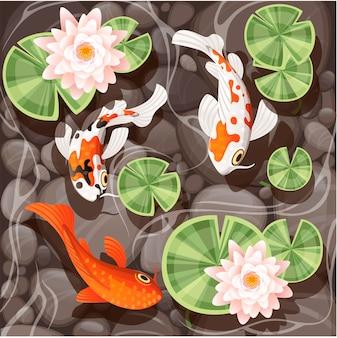 Carpe koi nageant dans un étang avec lotus de lys avec des feuilles vertes sur l'eau transparente et illustration vectorielle à fond en pierre