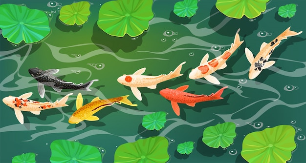 Carpes koi poissons sous l'eau.