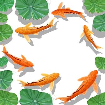 Carpes koi poissons sous le fond de l'eau