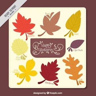 Carte décorative avec sorte de feuilles d'automne