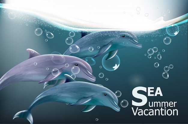 Carte d'été avec les dauphins