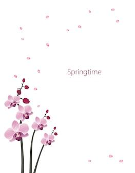 Carte postale de fleurs d'orchidées mignonnes composition de floraison rose de printemps avec des bourgeons et des feuilles