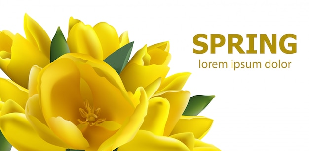 Carte de printemps tulipes jaunes