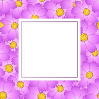 Carte rose de bannière de fleur de cosmos