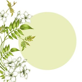 Carte de vecteur - fleurs de jasmin.