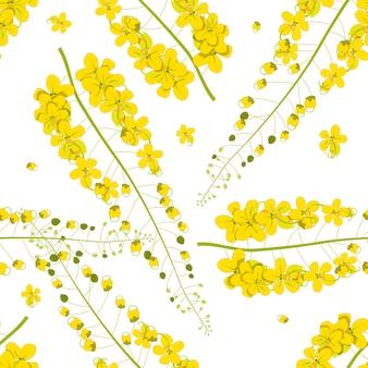 Cassia fistula - fleur de douche dorée sur fond blanc