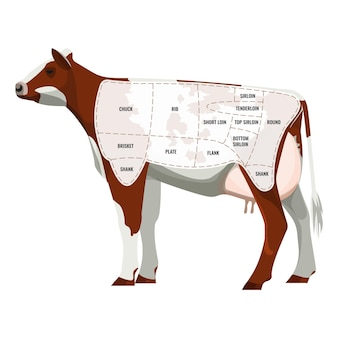 Caw steak parts, bovins de boucherie séparés en icône départements isolés