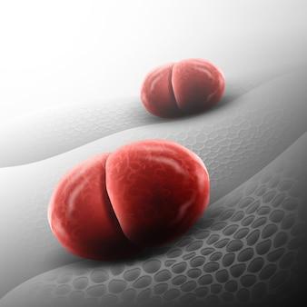 Cellule de bactéries diplocoques ou neisseria meningitidis sur fond
