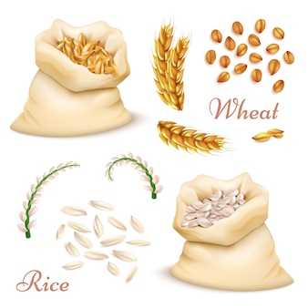Céréales agricoles - blé et riz isolés. vecteur réaliste grains, collection de cliparts oreilles