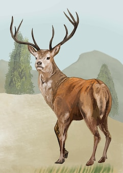 Cerf dessiné à la main