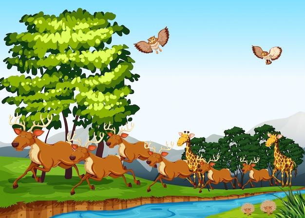 Cerfs et girafes sur le terrain
