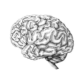 Cerveau humain dessiné à la main