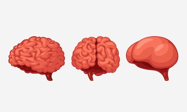 Cerveaux de dessin animé sur blanc