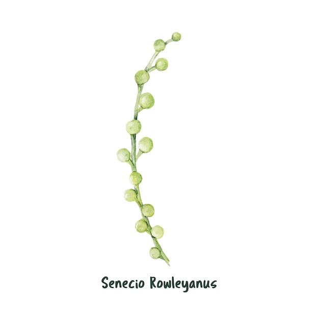 Chaîne de perles succulentes dessinées à la main