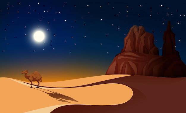 Chameau dans le désert de nuit