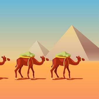 Chameaux en caravane devant les pyramides