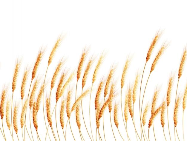 Champ de blé sur blanc.