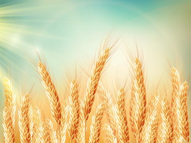 Champ de blé doré et journée ensoleillée.