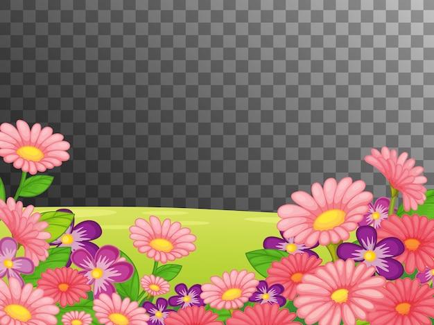 Champ de fleurs roses sur transparent
