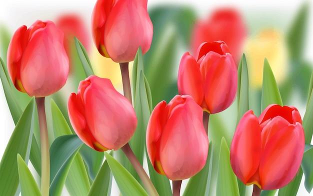 Champ de fleurs de tulipes de printemps