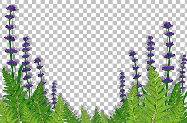 Champ de fleurs violettes sur fond transparent