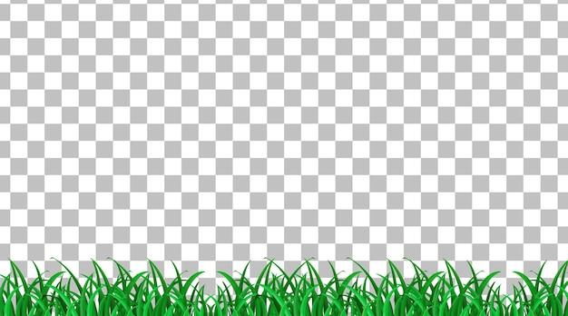 Champ d'herbe simple sur fond transparent