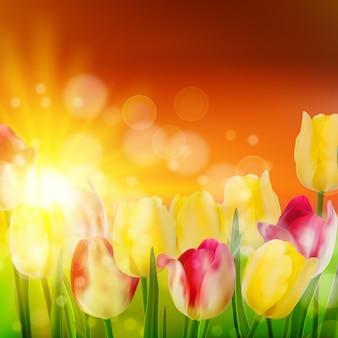 Champ de tulipes au coucher du soleil.