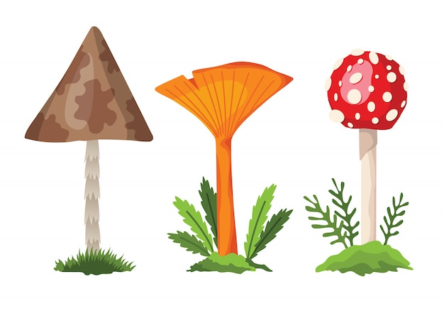 Champignon et champignon. illustration des différents types de champignons sur blanc