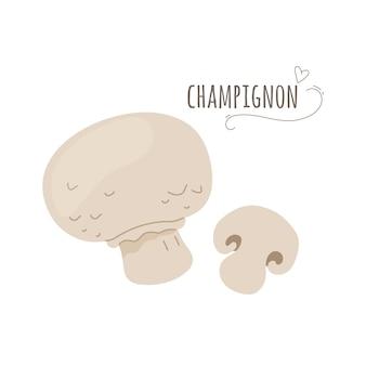 Champignon, champignons agaricus isolés sur fond blanc. illustration vectorielle plane simplifiée.