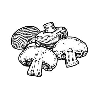 Champignon, illustration vectorielle dessinés à la main.