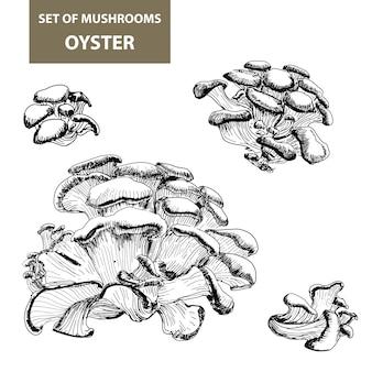 Champignons. dessin d'huître