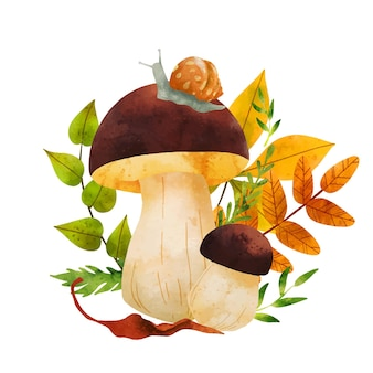 Champignons forestiers illustration aquarelle vectorielle dessinés à la main